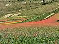 I Piani di Castelluccio durante la fioritura della lenticchia (2).jpg