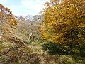 Ibarakawacho, Higashiomi, Shiga Prefecture 527-0216, Japan - panoramio (29).jpg