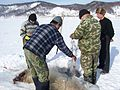 Ice-fishing on Baikal 1.jpg