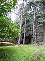 In Balblair Wood - geograph.org.uk - 917079.jpg