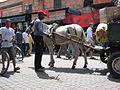 In the medina (2901402599).jpg