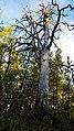 Inari, Finland - panoramio (16).jpg