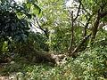 Infanta,Pangasinajf0062 07.JPG