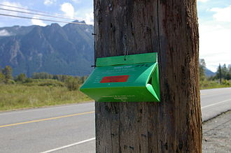 Insect trap - A sticky insect trap used to monitor pest populations