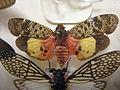 Insect Safari - lepidopteran 001.jpg