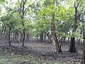 Inside the jungle of Pobitora Wildlife Sanctuary, Assam 01.jpg