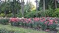 Int. Rose Test Garden, PDX, 2017 - 1.jpg