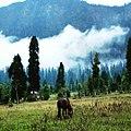 Into the wild, kashmir.jpg