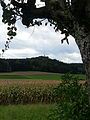 Irchelturm3.jpg