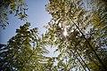 Japan Bamboo Sky (14052695034).jpg