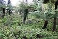 Jardin Feteira Rainha Sintra 12.jpg