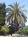 Jardins de Joan Brossa - Barcelona 04.JPG