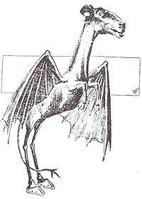 200px-Jersey_Devil_Philadelphia_Post_1909.jpg