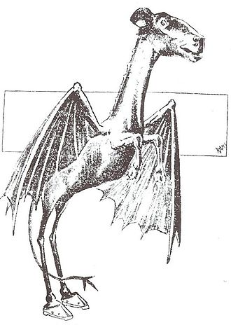 Jersey Devil - The Jersey Devil, Philadelphia Bulletin, January 1909