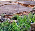 Just Starting Up, Zion NP, Angel's Landing Trail 5-1-14zr (14400449685).jpg