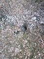 Kamień ze śladem - regularne wgłębienie.jpg