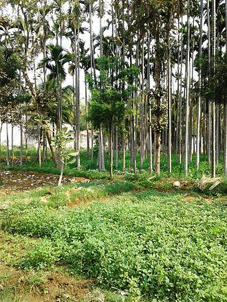 Kanakapura - Kanakapura bus station has green surroundings