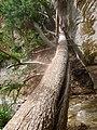 Kanarra Canyon, DyeClan.com - panoramio (3).jpg