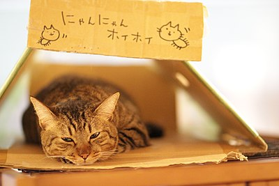 Kantaro taking a rest in a box (5941709022).jpg