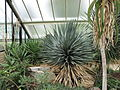 Kew Gardens - London - September 2008 (2955129535).jpg
