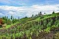 Kinigi, Ruanda (46266845792).jpg