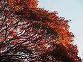 Kiyomizu-dera (24804271942).jpg