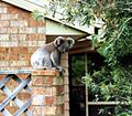Koala on a fence 1.jpg