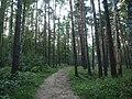 Kotelniki, Moscow Oblast, Russia - panoramio (124).jpg