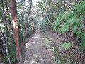 Kumano Kodo Dainichigoe World heritage60.JPG