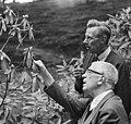 Kung Gustav VI Adolf studerar Rhododendron.jpg