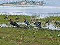 Lac Haïk-Ethiopie-Marabouts (5).jpg
