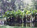 Lagos Parque del Este 000.JPG