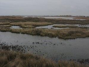 Laguna de la Nava 2.JPG