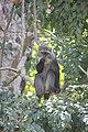 Laika ac Blue Monkey (9727699036).jpg