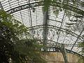 Laika ac Royal Greenhouses of Laeken (6316629623).jpg