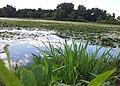 Lake Keller - Maplewood, MN - panoramio.jpg