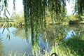 Lake fishing at home, Ludbreg - panoramio.jpg