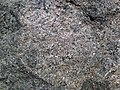 Lamprophyre (Dubreuilville Dike, Archean; Route 17 roadcut southeast of Princess Lake & north of Wawa, Ontario, Canada) 5 (48312384497).jpg
