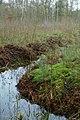 Landschap De Stroopers te Kemzeke - 372074 - onroerenderfgoed.jpg