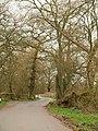 Lane at Columbjohn - geograph.org.uk - 1776432.jpg