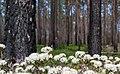 Lappland-reservat-2025.jpg