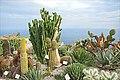 Le jardin exotique d'Èze sur la Côte d'Azur (France) (47567816202).jpg