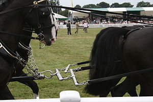 Terret - The lines (reins of the front pair of this team run through terrets on the bridles of the rear pair.