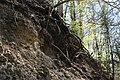Leitenwälder der Isar 0597.jpg