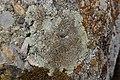 Lichen (43315782725).jpg