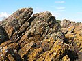 Lichens on Girvellan Point - geograph.org.uk - 1355580.jpg