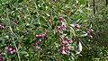 Lilli pilli fruit (15596952543).jpg