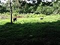 Limón, Jiménez, Costa Rica - panoramio (4).jpg