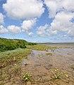 Loch Harray Marsh Marigold - geograph.org.uk - 1927006.jpg