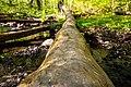 Log over creek.jpg